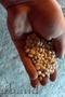 Продается фасоль белая ручная переборка в наличии более 3 тонн цена договор 0604