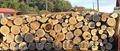 lemne de foc specii tari taeate butulaci